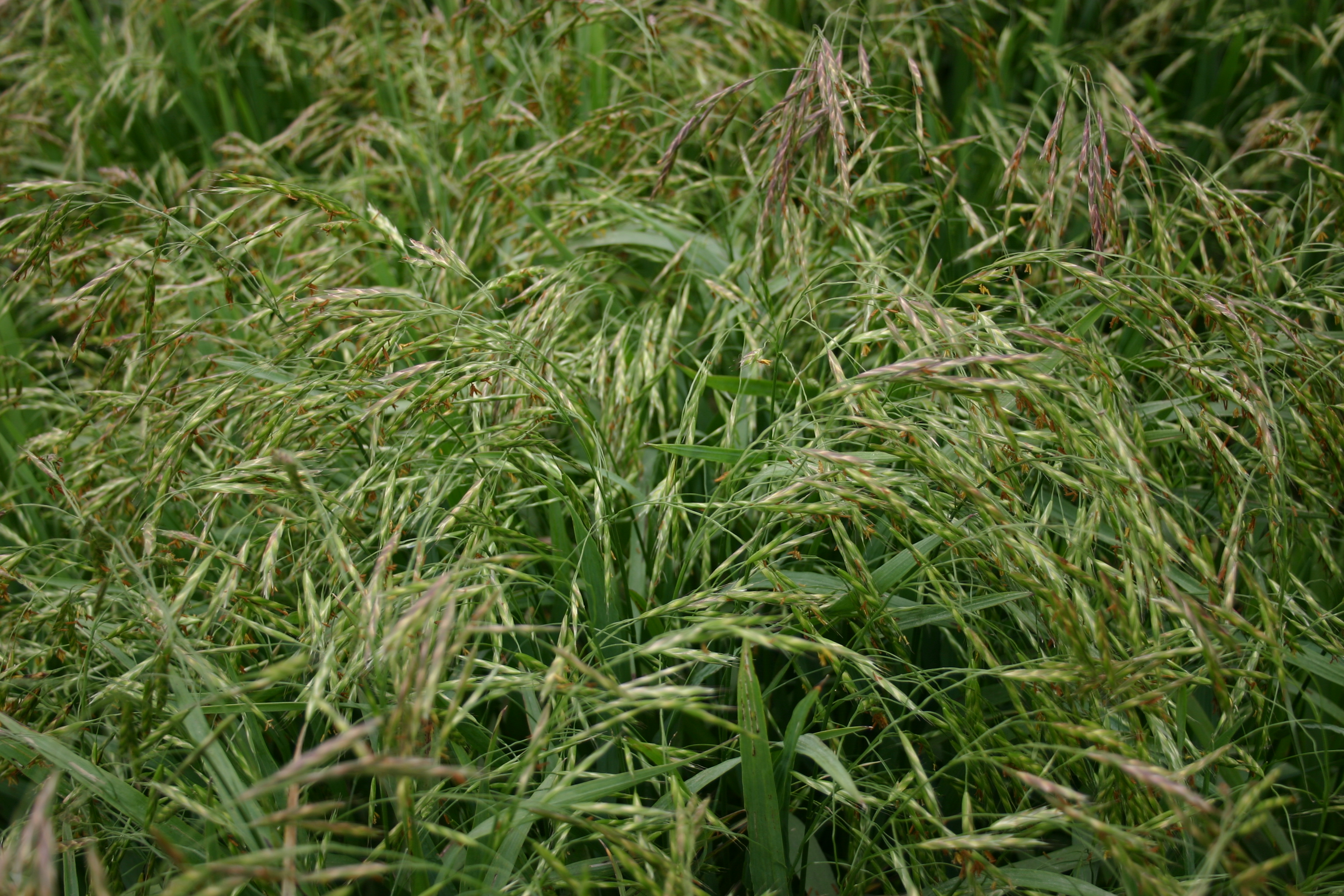 farm grass seed application rate per acre